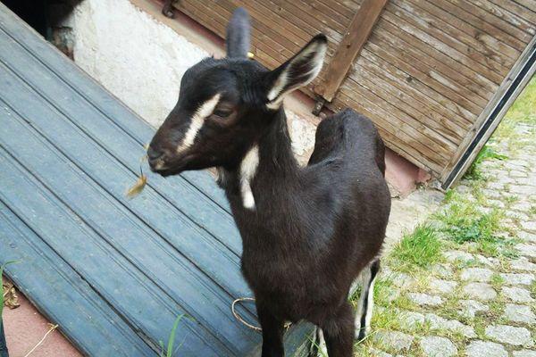 EMA - Espace de Médiation par l'Animal - Animal'Hom